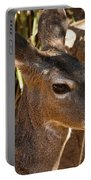 Coues White-tailed Deer - Sonora Desert Museum - Arizona Portable Battery Charger