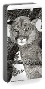 Cougar From Colorado Portable Battery Charger