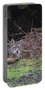 Coyote Curled Up Portable Battery Charger