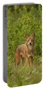 Coyote Happy Portable Battery Charger