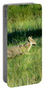Coyote In Boulder Higlands Portable Battery Charger