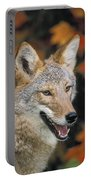 Coyote In Maple Portable Battery Charger