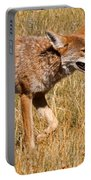 Coyote In Rocky Mountain National Park Portable Battery Charger