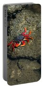 Crab Cake Portable Battery Charger