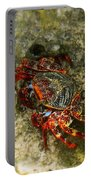 Crab In Cozumel Portable Battery Charger