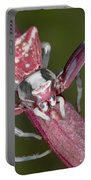 Crab Spider Hunting On Orchid Portable Battery Charger