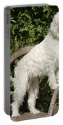 Cream Labradoodle On Wooden Chair Portable Battery Charger