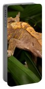 Crested Gecko Rhacodactylus Ciliatus Portable Battery Charger