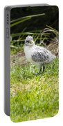 Crested Tern Chick - Montague Island - Australia Portable Battery Charger
