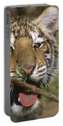 Crosseyed Siberian Tiger Cub Endangered Species Wildlife Rescue Portable Battery Charger
