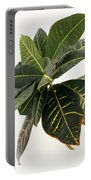 Croton Houseplant Portable Battery Charger