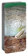 Cuban Tree Frog Osteopilus Portable Battery Charger