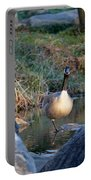 Curious Canadian Goose Portable Battery Charger