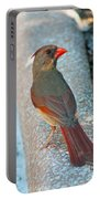 Curious Cardinal Portable Battery Charger