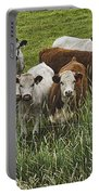 Curious Cows Portable Battery Charger