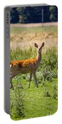 Curious Doe Portable Battery Charger