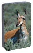 Curious Pronghorn Portable Battery Charger