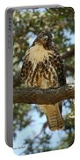 Curious Redtail Portable Battery Charger