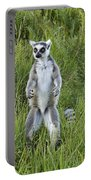 Curious Ring-tail Portable Battery Charger