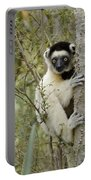 Curious Sifaka 1 Portable Battery Charger