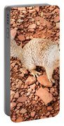 Curious Squirrel 2 Portable Battery Charger