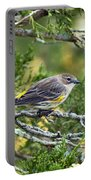 Curious Warbler Portable Battery Charger
