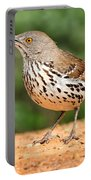 Curvedbill Thrasher With Grub Portable Battery Charger