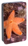 Cushion Winged Sea Star Portable Battery Charger