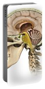 Cutaway View Of Human Skull Showing Portable Battery Charger