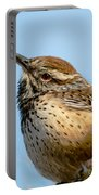 Cute Cactus Wren Portable Battery Charger by Robert Bales