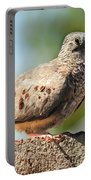 Cute Inca Dove Portable Battery Charger by Robert Bales