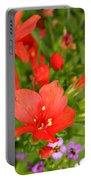 Cypress And Sweet Alyssum Portable Battery Charger
