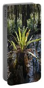 Cypress Knees And Ferns Portable Battery Charger
