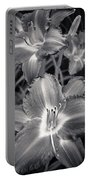 Day Lilies In Black And White Portable Battery Charger by Adam Romanowicz