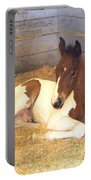 Day Old Colt Portable Battery Charger