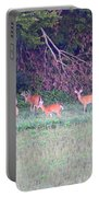 Deer-img-0128-005 Portable Battery Charger