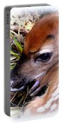 Deer-img-0349-002 Portable Battery Charger