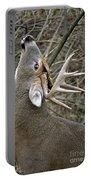 Deer Pictures 444 Portable Battery Charger