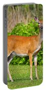 Delightful Doe Portable Battery Charger