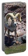 Desert Bighorn Sheep Portable Battery Charger
