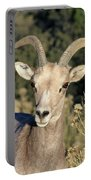 Desert Bighorn Sheep Zion National Park Portable Battery Charger