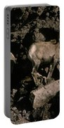 Desert Bighorns Ovis Canadensis Nelsoni Portable Battery Charger