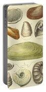 Devonian Fossils, Illustration Portable Battery Charger