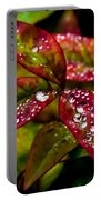 Dew On Autumn Leaves Portable Battery Charger