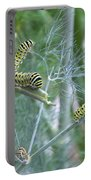 Dillweed And Caterpillars Portable Battery Charger