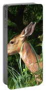 Doe In Tall Grass Portable Battery Charger