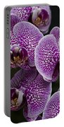 Doritaenopsis Leopard Prince  2633 Portable Battery Charger