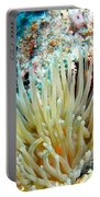 Double Giant Anemone And Arrow Crab Portable Battery Charger