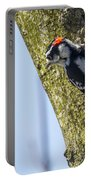 Downy Woodpecker - Male Portable Battery Charger