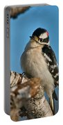 Downy Woodpecker Pictures 23 Portable Battery Charger